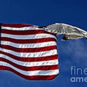 Salute The Flag Art Print by Tim Wilson