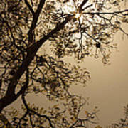 Saman In The Sky Art Print