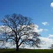 Same Tree Many Skies 11 Art Print