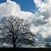 Same Tree Many Skies 13 Art Print