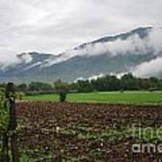 San Comino Valley Vines Art Print