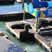 San Francisco Pier 39 Sea Lions 5d26105 Art Print by Wingsdomain Art and Photography