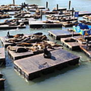 San Francisco Pier 39 Sea Lions 5d26115 Print by Wingsdomain Art and Photography