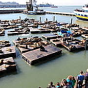 San Francisco Pier 39 Sea Lions 5d26116 Print by Wingsdomain Art and Photography