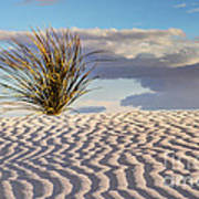 Sand Patterns And The Yucca Art Print