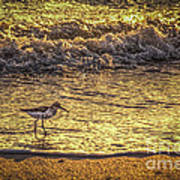 Sand Piper Print by Marvin Spates