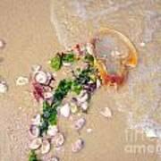 Sand Sea And Shells Art Print