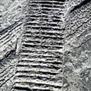 Sand Tracks Art Print