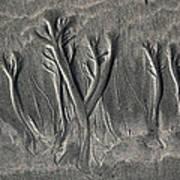Sand Trees Art Print