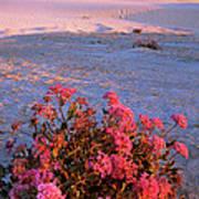 Sand Verbenas At Sunset White Sands National Monument Art Print