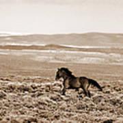 Sand Wash Mustang Art Print