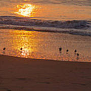 Sanderlings At Sunrise Art Print