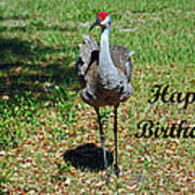 Sandhill Crane Birthday Art Print