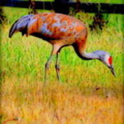 Sandhill Crane I Art Print