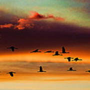 Sandhill Cranes Take The Sunset Flight Art Print