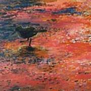 Sandpiper Cape May Art Print