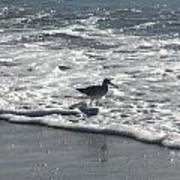 Sandpiper In The Surf Art Print