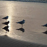 Sandpipers And Seagulls Art Print