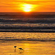 Sandpipers At Sunset Art Print