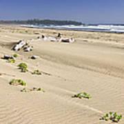 Sandy Beach On Pacific Ocean In Canada Art Print