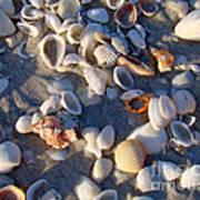 Sanibel Island Shells 1 Art Print