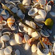 Sanibel Island Shells 4 Art Print