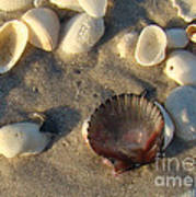 Sanibel Island Shells 5 Art Print