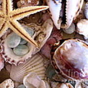 Sanibel Shells Art Print