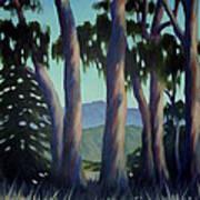 Santa Barbara Eucalyptus Grove Art Print