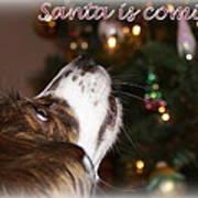 Santa - Christmas - Pet Art Print