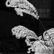 Santa Fe Feather Duster Art Print