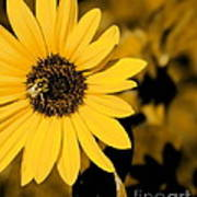Santa Fe Sunflower 1 Art Print