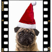 Santa Pug - Canine Christmas Art Print by Edward Fielding