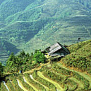 Sapa Rice Fields Art Print