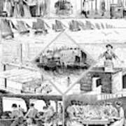 Sardine Fishery, 1880 Art Print