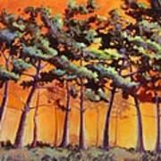 Sardis Pines Art Print