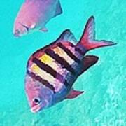 Sargeant Fish Art Print