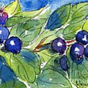 Saskatoon Berries Art Print