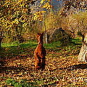 Sassy Alpaca Art Print by Susan Hernandez