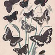 Satyridae Art Print