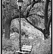 Savannah Afternoon - Black And White Art Print