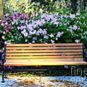 Savannah Bench Art Print by Carol Groenen