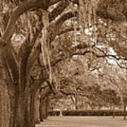 Savannah Sepia - Emmet Park Art Print