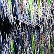 Sawgrass Reflections Art Print