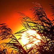 Sawgrass Sunset  Art Print