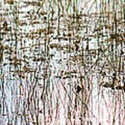 Sawgrass Swamp Panorama Art Print