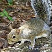 Scampering Squirrel Art Print