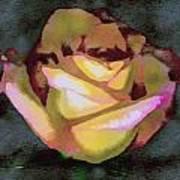 Scanned Rose Water Color Art Print
