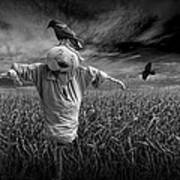 Scarecrow And Black Crows Over A Cornfield Art Print
