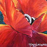 Scarlet Poppy Art Print by Tanja Ware